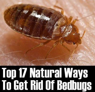 Bed Bug Bites Treatment Naturally